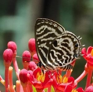 Bobiri Butterfly Sanctuary